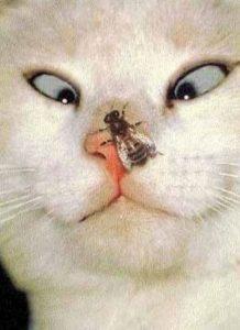 Kissa ja mehilinen