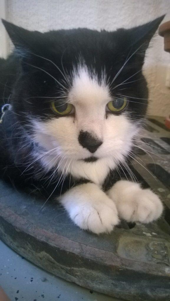 Olvi kissa