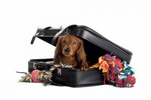 Travel with Pets dog cat pets pet