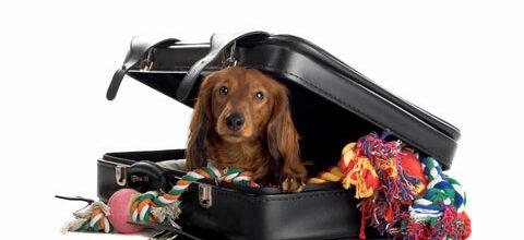 Koira mukaan matkalle – mitä pitää muistaa?