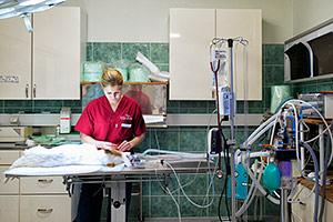 anestesia2