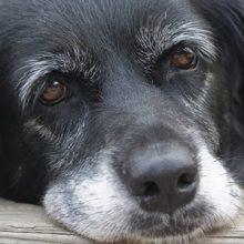 Koiran eturauhasvaivat