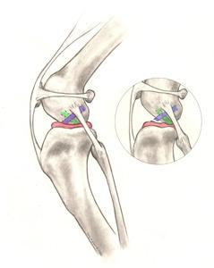 eturistiside-anatomia