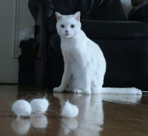 hairballs_8-health-problems-that-cats-can-get