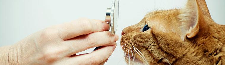 Kissojen ylempien hengitysteiden tulehduksista