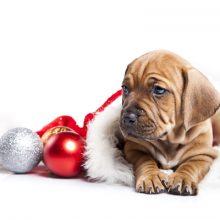 Lemmikit ja joulun vaarat