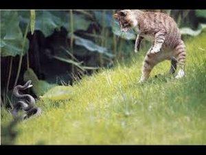 kissa ja krme