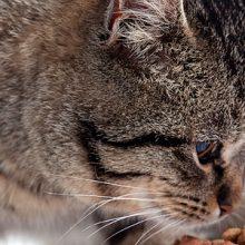 Kissan ruokinnasta