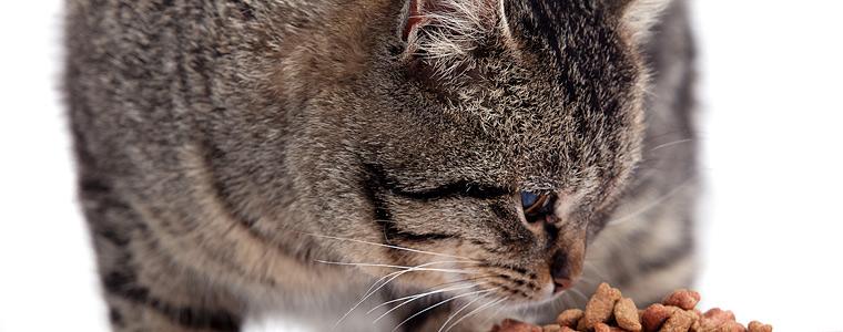 kissanruokinta