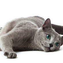 Munuaisvikaisen kissan hoito-ohjeita