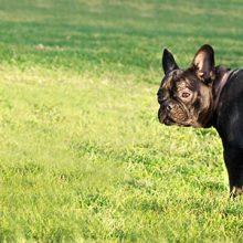 Koiran äkilliset oksennus- ja ripulitaudit