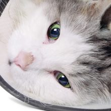 Kissa teho-osastolla