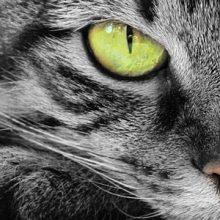 Usein kysyttyä kissoista