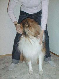 Ote: Toisella kädellä voidaan tukea koiraa.