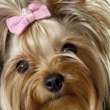Kalsiumoksalaattivirtsakivet koiralla