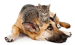 Koirien ja kissojen terveys & hoito