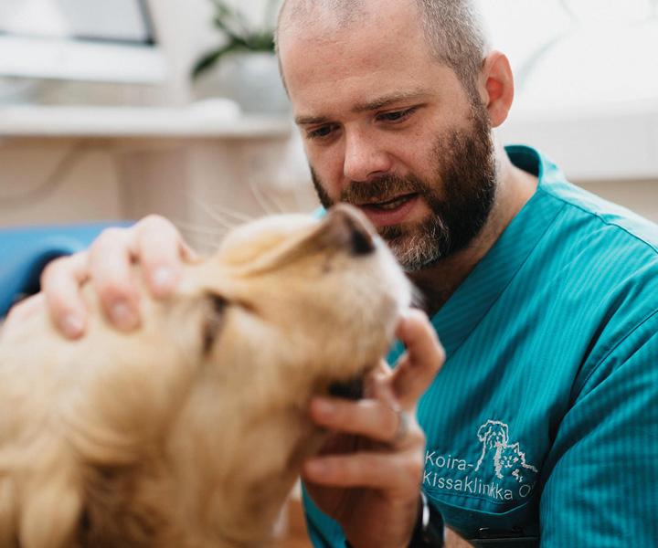 Koira-Kissaklinikka toimenpiteiden hinnat