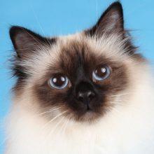 Kissojen ortopediset ongelmat