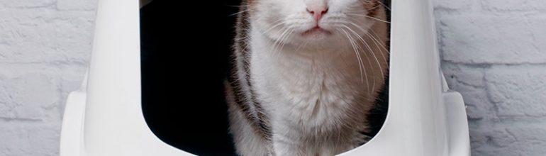 Kissojen virtsatieongelmat