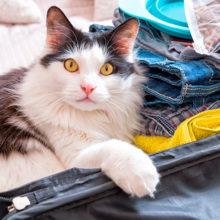 Kissan zoonoottiset sairaudet- mitkä sairauksista voi tarttua ihmiseen
