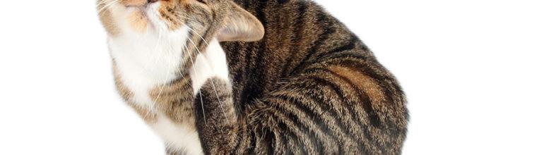 Kissan erilaiset iho syndroomat