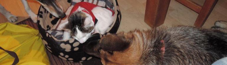 Kissan akuuttit sairastumiset ja hätätapaukset.