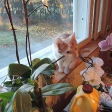 Kissalle myrkylliset aineet